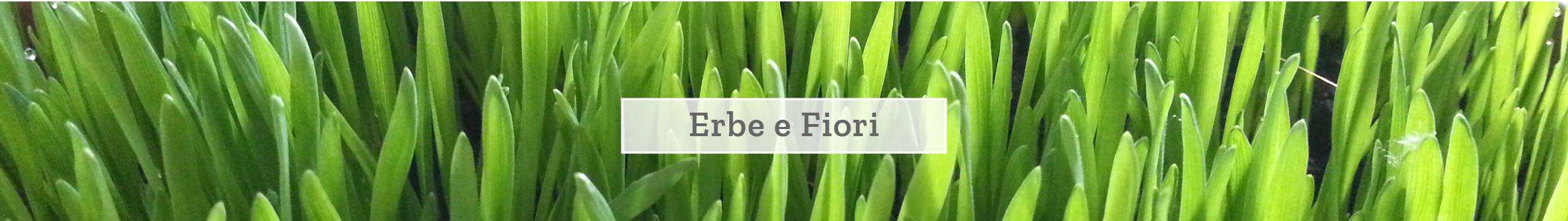 Erbe e fiori